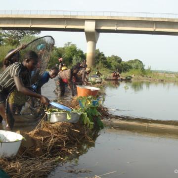 Kévin de la Croix : Une pêche collective féminine sur le fleuve Niger en Guinée. Le cômondia ou le diaramba