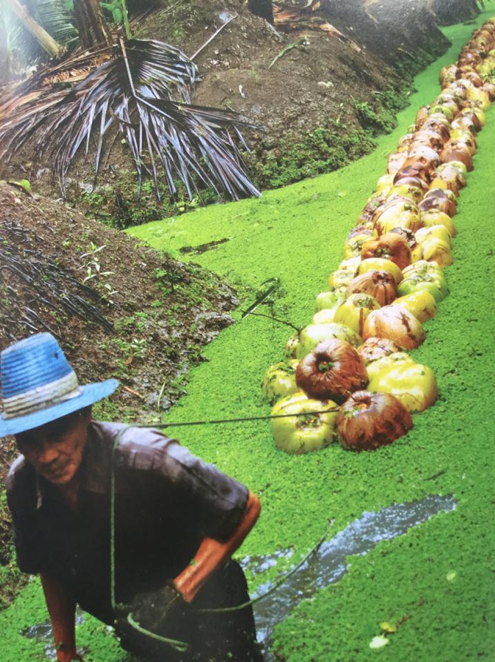 La Phot'eau insolite de la semaine : » 'Billons chinois' Thaïlandais»