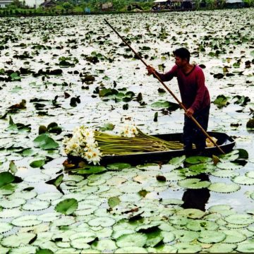 La Phot'eau insolite de la semaine : « Collecting lotus flowers in a flooded field, Central Thailand »