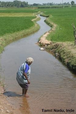 Soutenance d'HDR de Olivia Aubriot – «Les systèmes d'irrigation paysans à travers techniques et inscriptions territoriales. À propos de la co-construction eau-société» – mardi 30 juin 2020