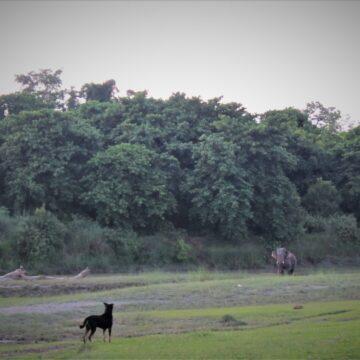 Nolwen Vouiller : La rivière 'Khauraha', médiatrice entre non-humains et villageois (Népal)